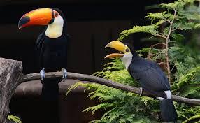 طائر الطوقان