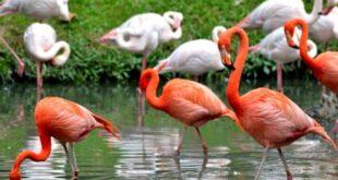 بحث عن طيور لا تطير للصف الرابع الابتدائي - ميديا ارابيا