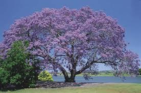 أشجار زينة جميله جدا طبيعة