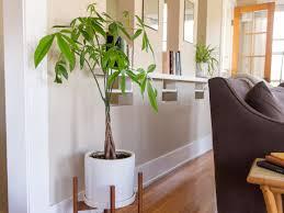 انواع الشجر المنزلى