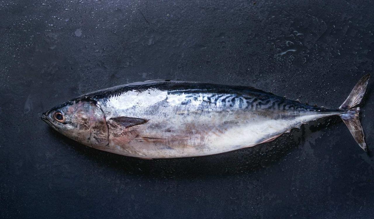 انواع الاسماك واسمائها بالصور