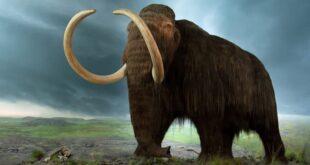 حقائق مدهشة عن فيل الماموث بالصور » مجلتك