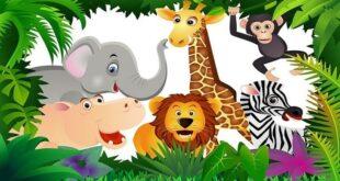 انواع الحيوانات للاطفال