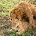 تكاثر الحيوانات البرية
