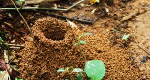 بيت النملة