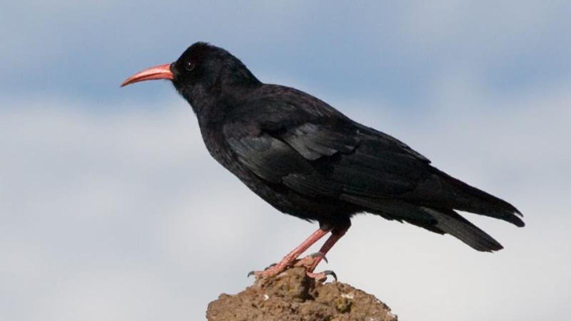 طيور مفترسة