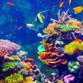 مرجان البحر