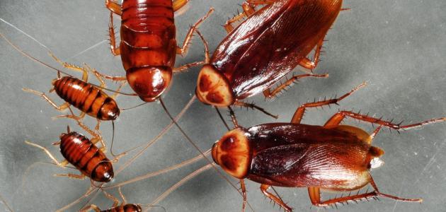 طرق التخلص من الصراصير في المنزل