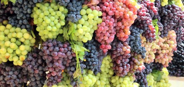 العنب وأهم فوائده وأضراره