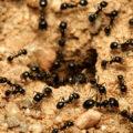 طرق التخلص من النمل في المنزل