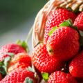الفراولة وأهم فوائدها وأضرارها