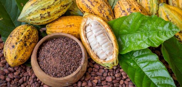 الكاكاو وأهم فوائده وأضراره