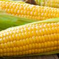 الذرة وأهم فوائده وأضراره