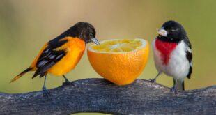 أسماء طيور كيوت