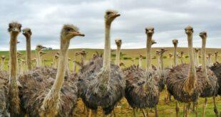 الطيور في الجزائر