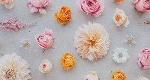 أسماء زهور فرنسية