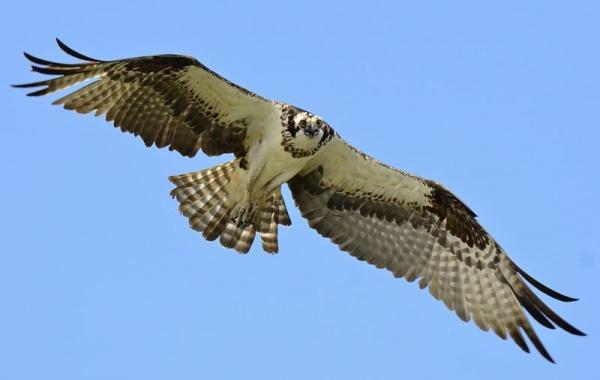 أنواع الطيور البرية