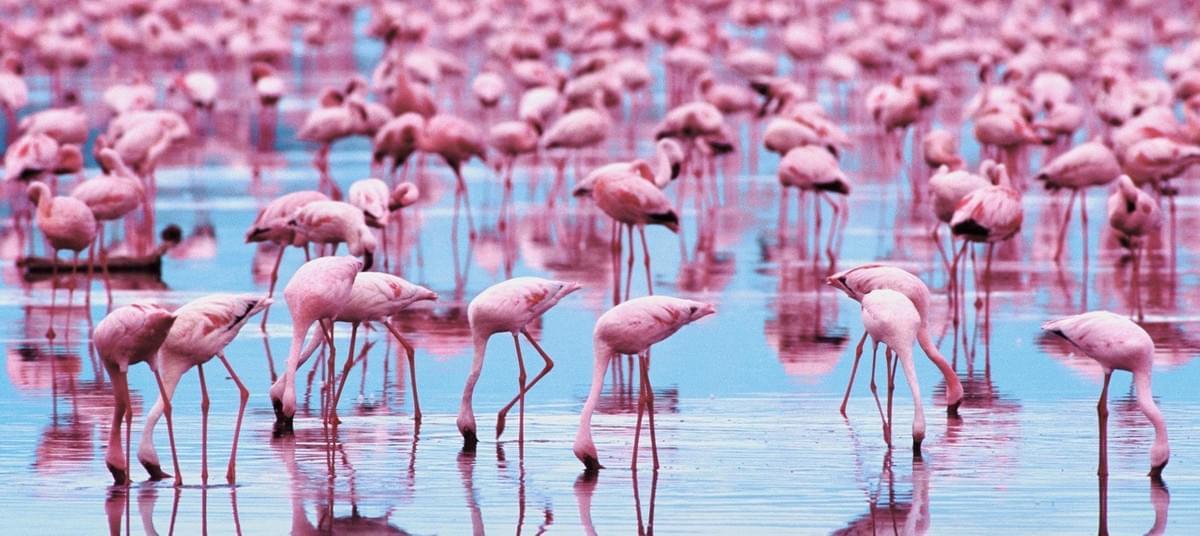 أنواع الطيور في الإمارات